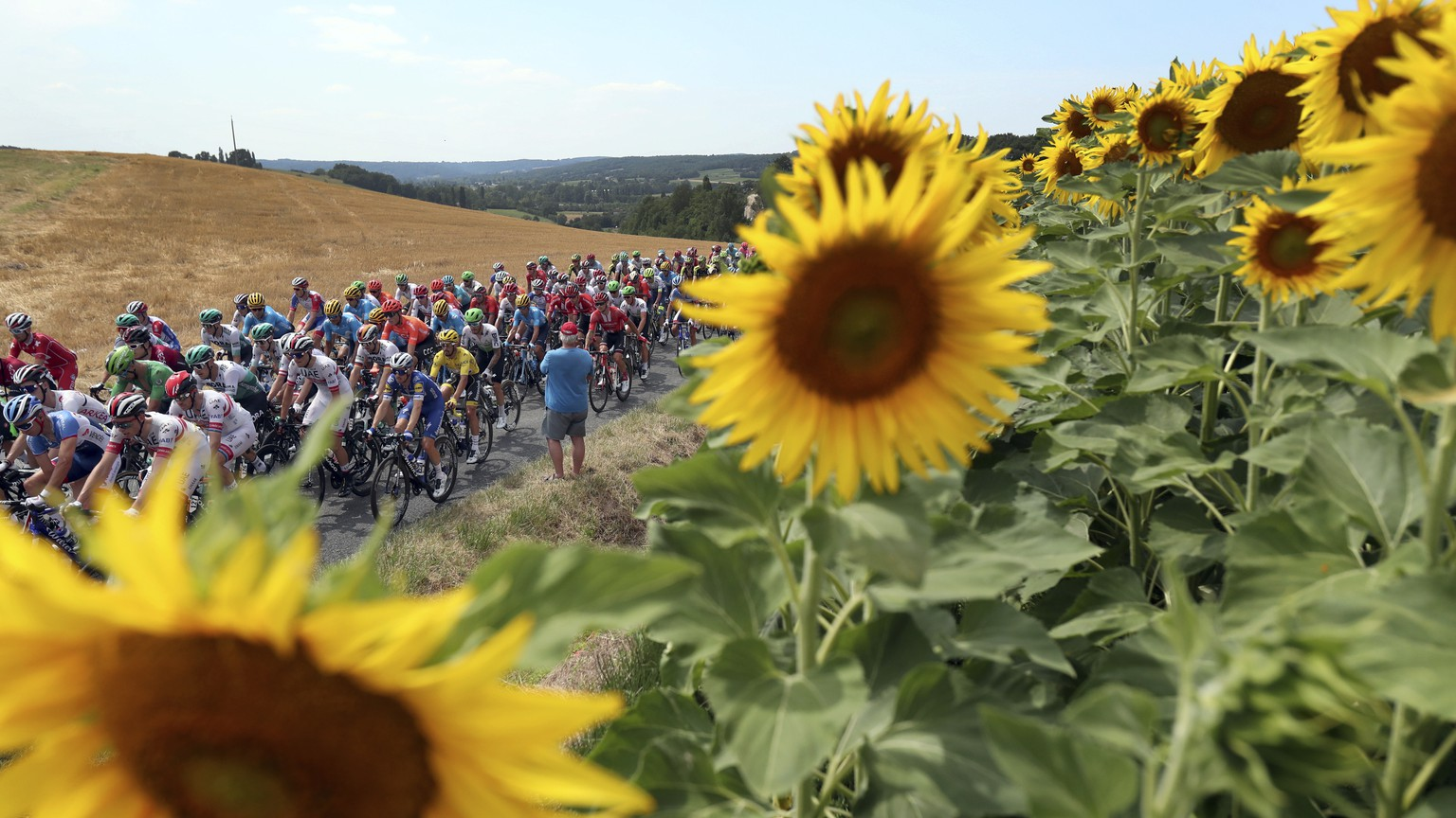 The pack rides past a sunflowers fields during the eleventh stage of the Tour de France cycling race over 167 kilometers (103,77 miles) with start in Albi and finish in Toulouse, France, Wednesday, July 17, 2019. (AP Photo/Thibault Camus)