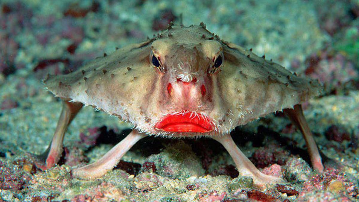 Tiere google bilder süße 39 Bilder