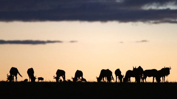 Animals graze at sunset at the Naboisho Conservancy adjacent to the Masai Mara National Reserve October 7, 2014.   REUTERS/Goran Tomasevic (KENYA - Tags: ENVIRONMENT ANIMALS)