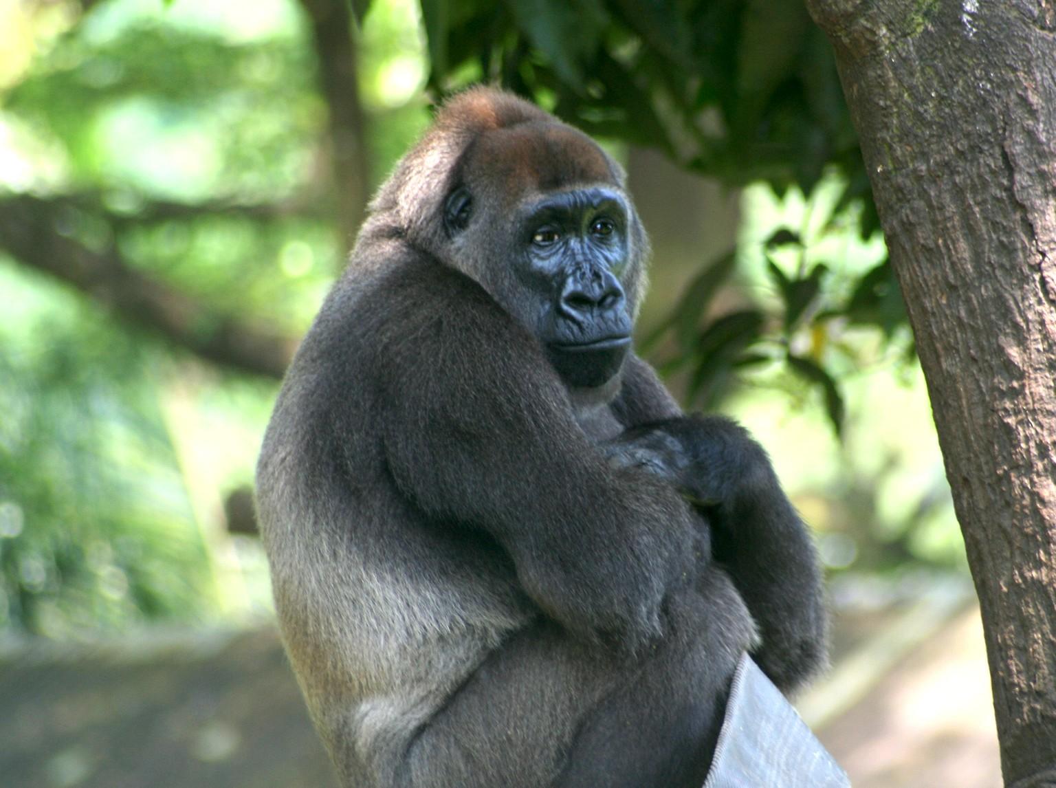 33 Tier Gifs Die Dich Garantiert Zum Lachen Bringen Watson